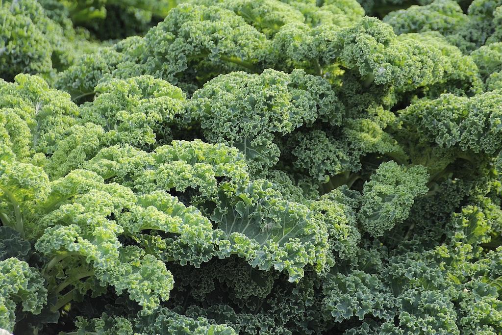Healthy Food Kaleen restaurantes de madrid